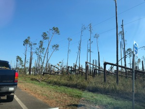 Trees snapped in half like toothpicks.