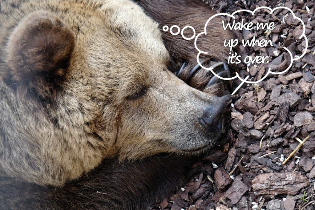 "Sleeping brown bear with thought bubble ""Wake me up when it's over"""
